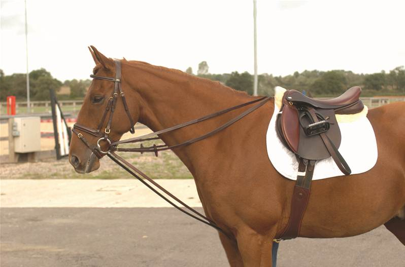 Janice L. Blake Handicapping Proper Use of Draw Reins