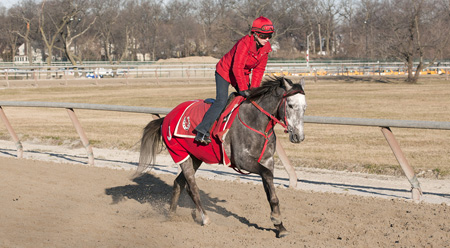 JB gallops Rudy, the race horse, on a crisp day in winter at Belmont on the pony track.