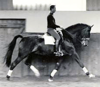 Janice L. Blake Tom Poulin Extended Trot Your Mane Track