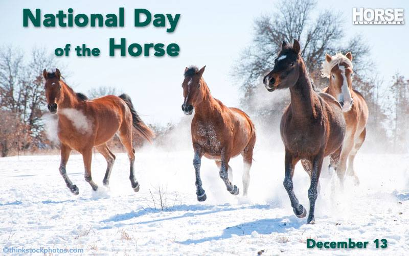 Happy National Horse Day!