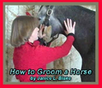 How to Groom a Horse Cover c