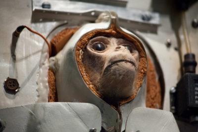 Monkey testing cruelty free Janice L. Blake
