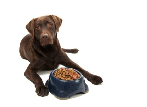 Dog Food Secrets Janice L. Blake