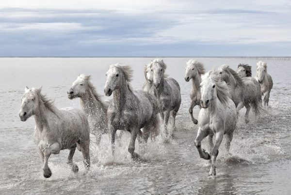Horses running in water Janice L. Blake Your Mane Track