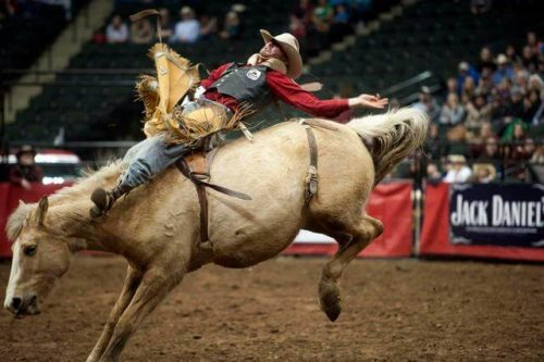 Bucking Bronc Janice L. Blake Your Mane Track